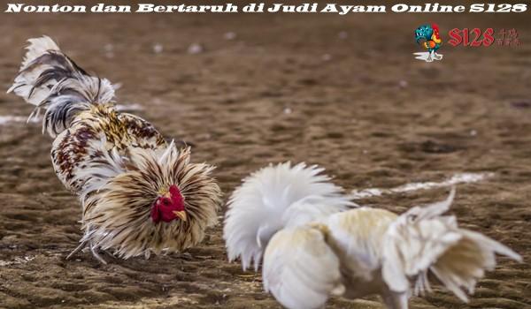 Nonton dan Bertaruh di Judi Ayam Online S128